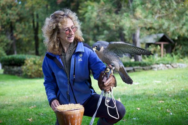 Photo of author Sy Mongomery holding peregrine falcon. Photo by Keith Ellenbogen